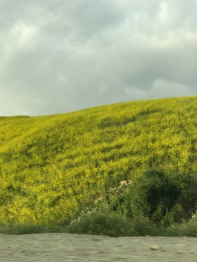 CA wildflower bloom