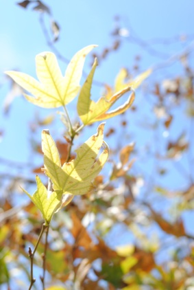 CA fall